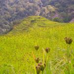 हर्क बहादुर आम नेपाली जनताको प्रतिनिधि हो – Harka Bahadur | Nepali Long Question