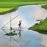 Fish Farming – Pond Management and Economic Importance   Biology Class 12